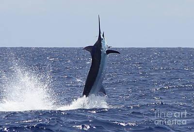 Sports Fish Photograph - Vertical Blue by Carol Lynne
