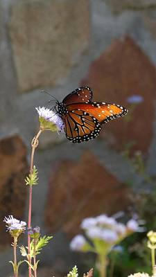 Photograph - Winery Vertical Butterfly And Flower by Kristina Deane