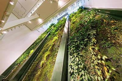 Installation Photograph - Vertical Garden by Louise Murray