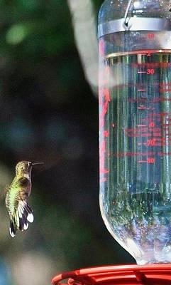 Photograph - Vertical Green Hummingbird by Kristina Deane