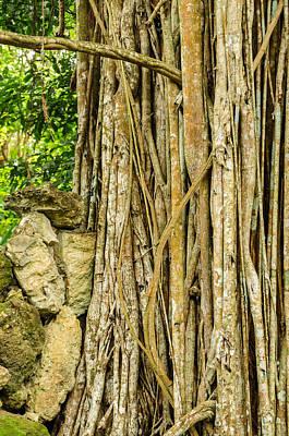 Gnarly Photograph - Vertical Vines by Jess Kraft