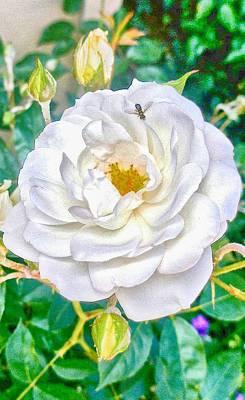 Photograph - Hdr Vertical Bernardus' Rose Bush by Kristina Deane
