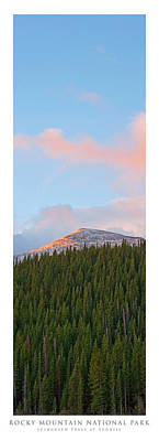 Colorado Photograph - Vertorama Evergreen Trees At Sunrise Rocky Mountain National Park by Posters of Colorado