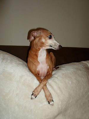 Veruca   - I Am Beautiful Ok -  Italian Greyhound Art Print