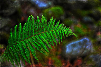 Photograph - Very Green Fern by Randi Grace Nilsberg