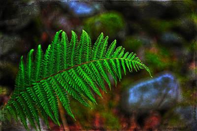 Photograph - Very Green Fern by Randi Grace Nilsberg