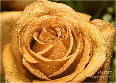 Photograph - Very Wet Rose by Debbie Portwood