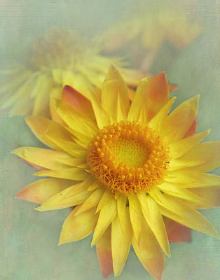 Strawflower Photograph - Very Yellow by David and Carol Kelly