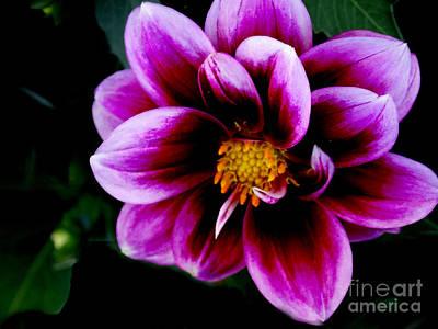 Painting - Viberant Petals  by Scott B Bennett
