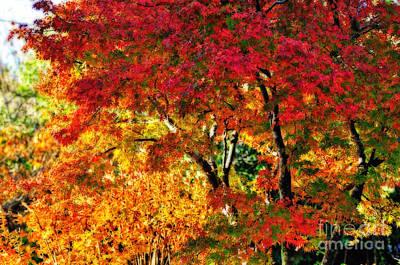 Vibrance Of Autumn Art Print by Kaye Menner