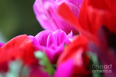 Photograph - Vibrant Bouquet  by Lynn England