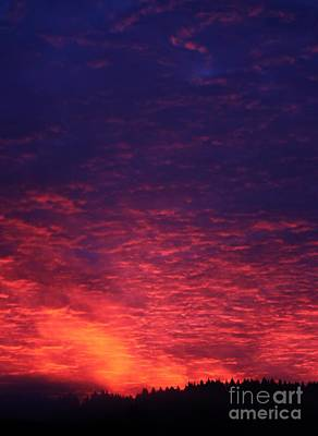 Photograph - Vibrant Dawn by Erica Hanel