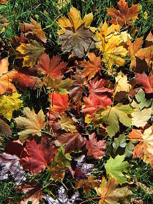 Photograph - Vibrant Days Of Autumn by Margaret McDermott