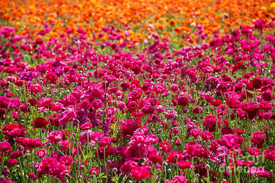 Floral Photograph - Vibrant Flower Field by Julia Hiebaum