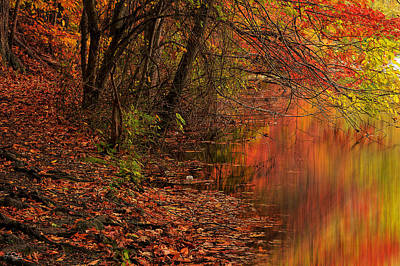 Red Maple Trees Photograph - Vibrant Reflection by Lourry Legarde