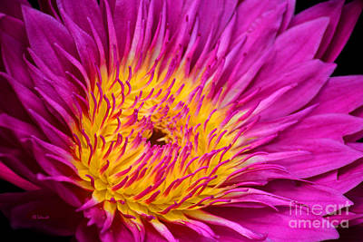 Photograph - Vibrant Waterlily by E B Schmidt