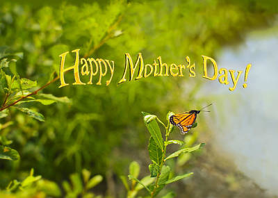Photograph - Viceroy Butterfly Mothers Day Card by Marianne Campolongo