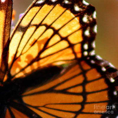 Photograph - Viceroy Butterfly Wing Square by Karen Adams