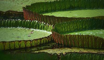Photograph - Victoria Lily Pads On The Pond by Nadalyn Larsen