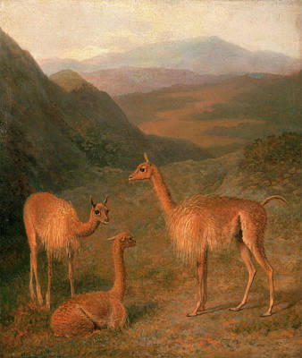 Alpaca Painting - Vicunas Three Vicunas The Vicuna The Lama by Litz Collection