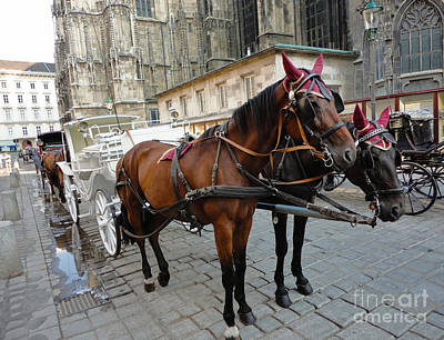 Photograph - Vienna Austria - St. Stephen's Cathedral - Horses by Gregory Dyer
