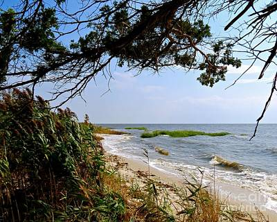 Photograph - View At East Point  by Nancy Patterson