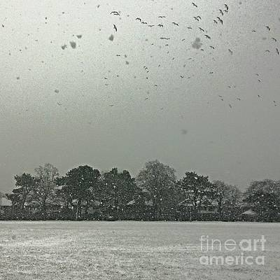 Animals Wall Art - Photograph - View From My Home Right Now.  Seagulls by Isabella Shores