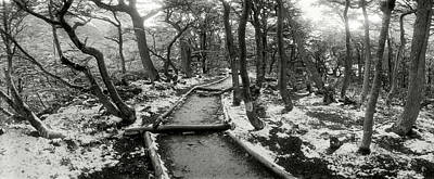 Winter Landscapes Photograph - View Of A Trail Through The Trees by Panoramic Images