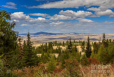 View Of Cottonwood Butte Art Print
