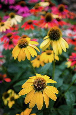 Garden Flowers Photograph - View Of Flowers In A Garden, Garden by Panoramic Images
