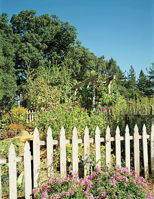 Photograph - View Of Picket Fence Garden by Mary E. Nichols