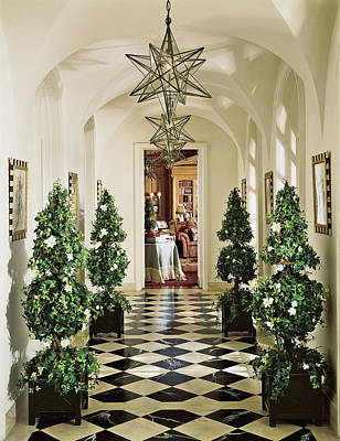 Photograph - View Of Pine Tree In Corridor by Mary E. Nichols