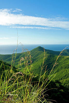 Coastal Forest Photograph - View Of South West Coast From Boggy by Nico Tondini