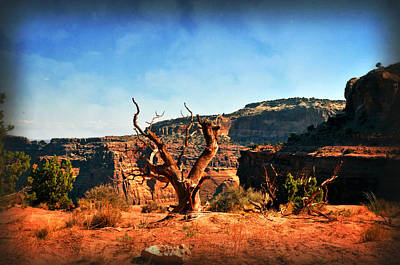 View Of The Canyon Art Print by Marty Koch