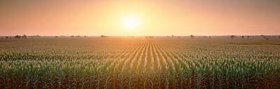 Romantic Location Photograph - View Of The Corn Field During Sunrise by Panoramic Images