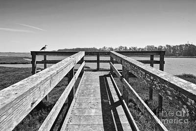 View Of The Elkhorn Slough From A Platform.  Art Print by Jamie Pham