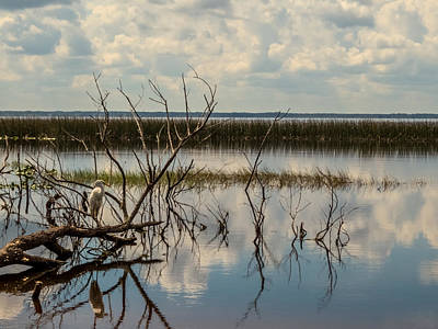 Egret Photograph - View Of The Lake by Zina Stromberg
