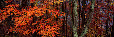 View Of Trees In Forest, Great Smoky Art Print