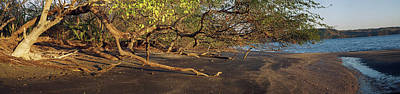 View Of Trees On The Beach, Liberia Art Print by Panoramic Images