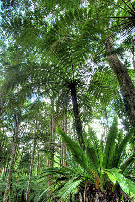 Exoticism Photograph - View Of Vegetation In Bali Botanical by Jaynes Gallery