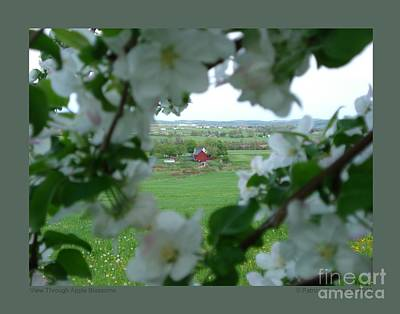 Photograph - View Through Apple Blossoms by Patricia Overmoyer