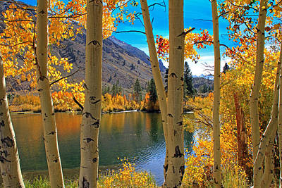 Fall Foliage Photograph - View Through The Aspens by Donna Kennedy