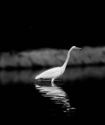 Photograph - Vigilance by Eileen Shahbazian