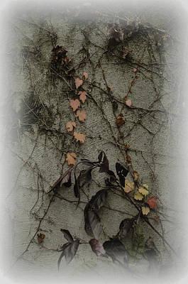 Vignes D'automne Art Print