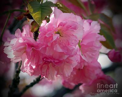 Photograph - Vignette Cherry Blossom by Gena Weiser