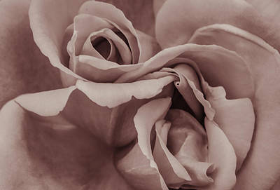 Photograph - Vignette Rose. by Slavica Koceva