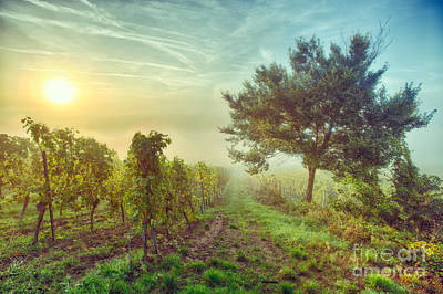 Vineyards Of Alsace Photograph - Vignoble Alsacien by JOCKERS Nadine