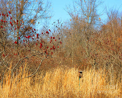 Photograph - Village Creek State Park Bird House by Lizi Beard-Ward