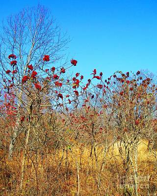 Photograph - Village Creek State Park Sumac  by Lizi Beard-Ward