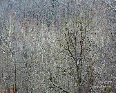 Photograph - Village Creek Winter Forest 2 by Lizi Beard-Ward